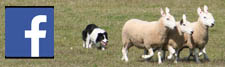 Surrey Sheep Dog Society Facebook